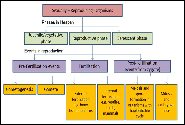 Insexual reproduction