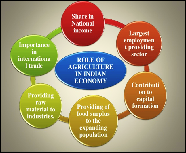 essay on role of agriculture in indian economy Economic growth: agriculture is the backbone of indian economy though, with the growth of other sectors, the overall share of agriculture on gdp of the country has decreased though, with the growth of other sectors, the overall share of agriculture on gdp of the country has decreased.