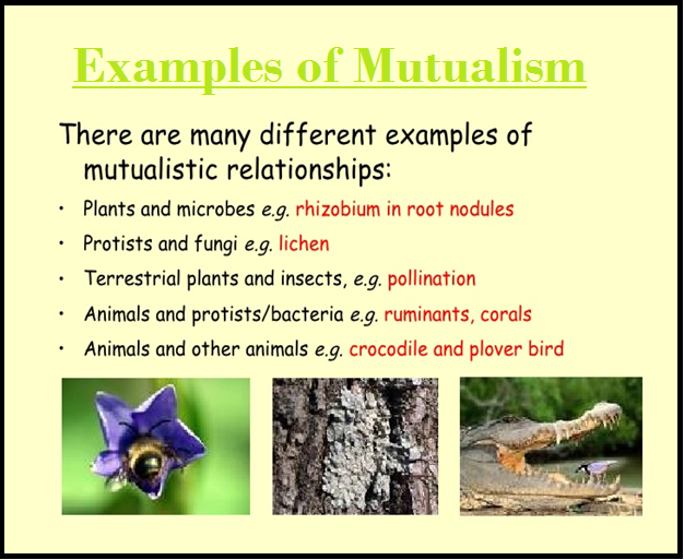 Biology Commensalism And Mutualism