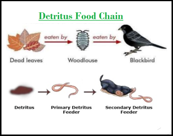 Simple Food Chain Images