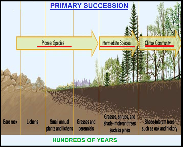 Biology Ecological Succession