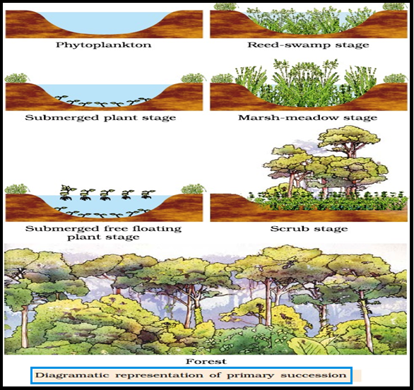 Biology ecological succession another important fact is to understand that all succession all succession whether taking place in water or on land proceeds to a similar climax community publicscrutiny Images